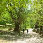 Naturlandschaft Chilla.