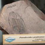 Paläontologisches Museum Universidad de Zaragoza.